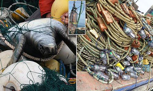 Lưới rê gắn đèn LED giúp bảo vệ rùa biển khỏi hoạt động đánh bắt thủy sản. Ảnh: Nature World News.