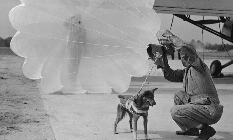 Lính dù Anh kiểm tra trang bị của một con chó. Ảnh: Der Spiegel.