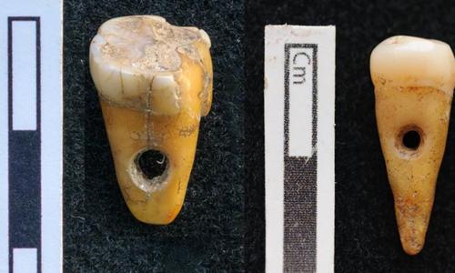 Hai chiếc răng được đục lỗ nhỏ để làm trang sức. Ảnh: Fox News.