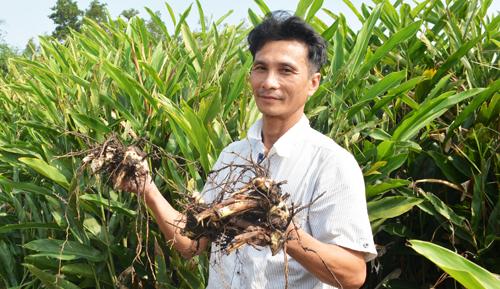 Anh Hậu thu nhập cao từ nghề trồng giềng. Ảnh: Hoàng Hạnh.