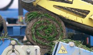 Cỗ máy thu hoạch cỏ tự động