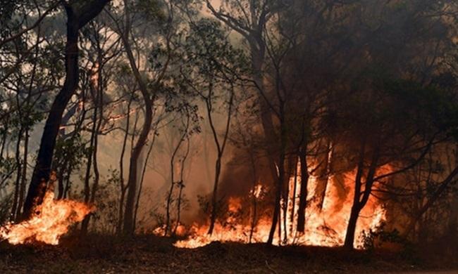 Một đám cháy rừng gần Bilpin, cách thành phố Sydney 90km về phía tây bắc. Ảnh: AAP.