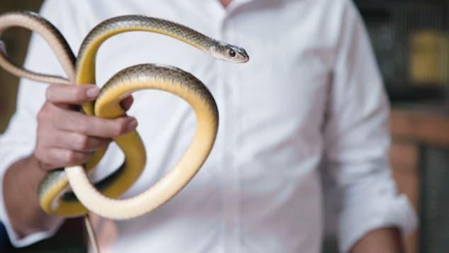 Làng rắn ở Hà Nội nổi tiếng cả ở Việt Nam và thế giới. Ảnh: Diana Diroy