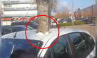 Ôtô có trước hay cây có trước?
