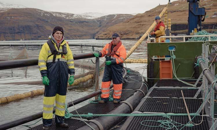 Những người làm việc trong một trại cá trên đảo Streymoy thuộc Quần đảo Faroe. Ảnh: NY Times.