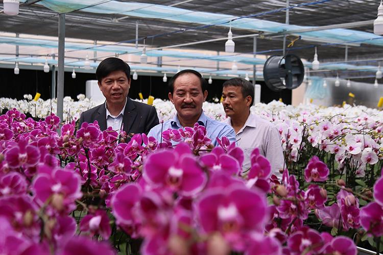 Ông Nguyễn Quân Chính (giữa) đánh giá dự án đã thành công, lần đầu trồng hoa hồ điệp Đài Loan ở Quảng Trị. Ảnh: Hoàng Táo