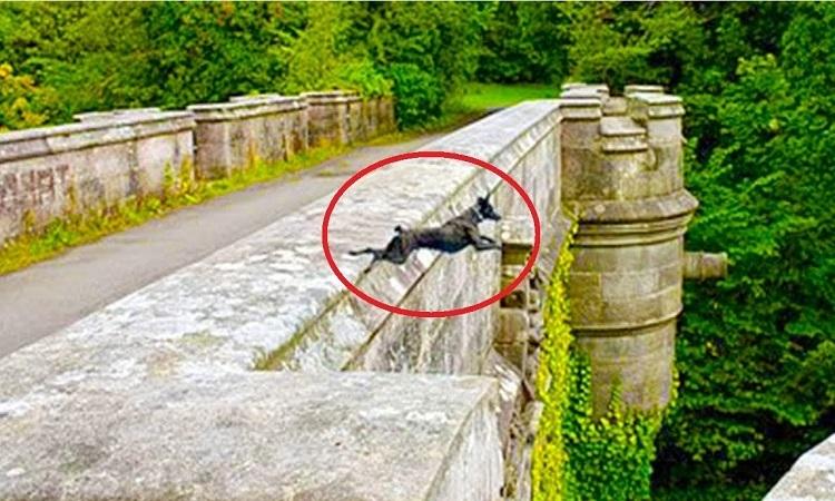 Photo of 'Cầu tử thần' khiến hàng trăm con chó tự tử