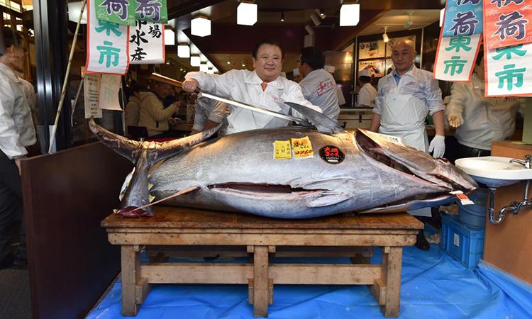 Kiyoshi Kimura (giữa) chuẩn bị xẻ thịt con cá ngừ vây xanh nặng 276 kg có giá 1,8 triệu USD trong phiên đấu giá ngày 5/1 tại Tokyo, Nhật Bản. Ảnh: AFP.