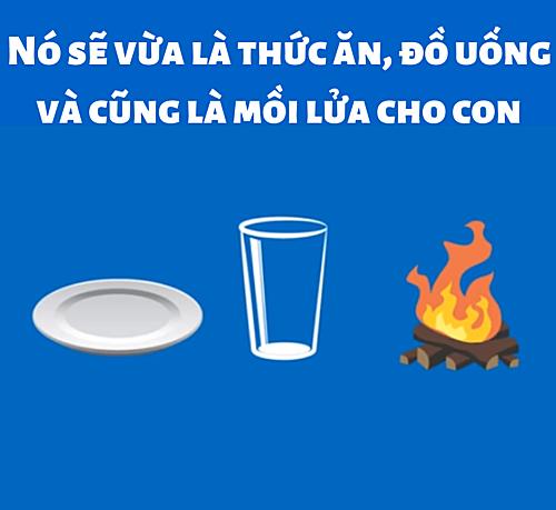 Quả gì vừa là thức ăn, đồ uống và cũng là mồi lửa? - 5