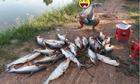 Cần thủ khoe chiến lợi phẩm với hàng chục con cá