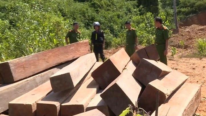 Số gỗ bị nhà chức trách thu giữ hồi tháng 8 năm ngoái. Ảnh: Ngọc Oanh.