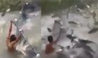 Hàng ngàn con cá nhảy khỏi mặt nước tấn công ngư phủ