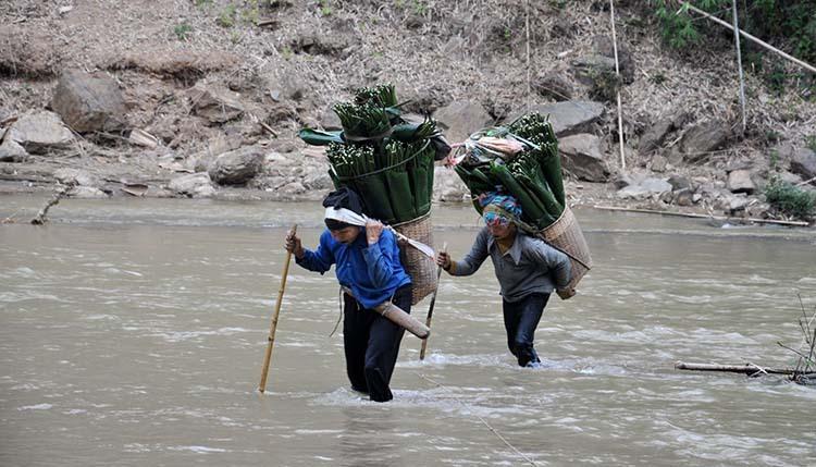 Để tìm được những chiếc lá ưng ý, người hái lá dong ở Quan Sơn phải băng qua sông, vượt nhiều km đường rừng. Ảnh: Lê Hoàng.