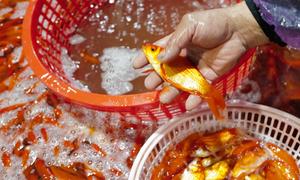 Chợ đầu mối xuyên đêm bán cá chép đỏ Sea Games 2019 - VnExpress