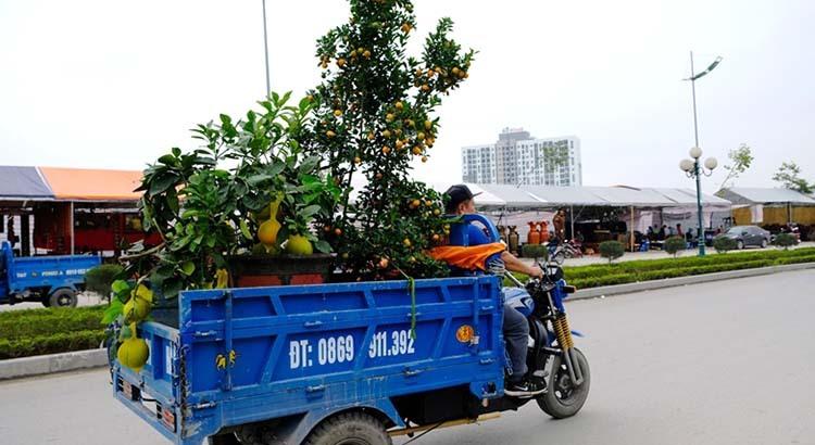Ngoài xe máy, nhiều người còn dùng xe ba bánh, ôtô chở cây. Ảnh: Lê Hoàng.