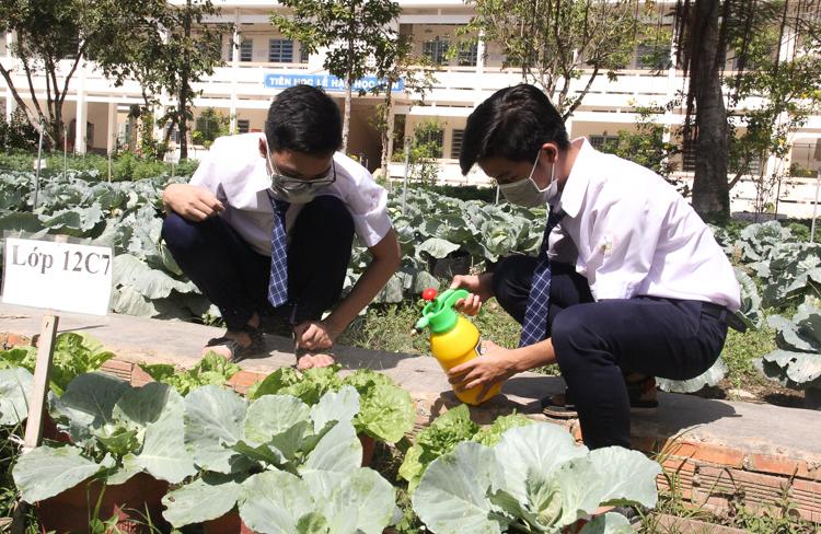 Các học sinh sử dụng chế phẩm sinh học do mình làm ra để xử lý sâu bệnh cho vườn rau. Ảnh: Cửu Long