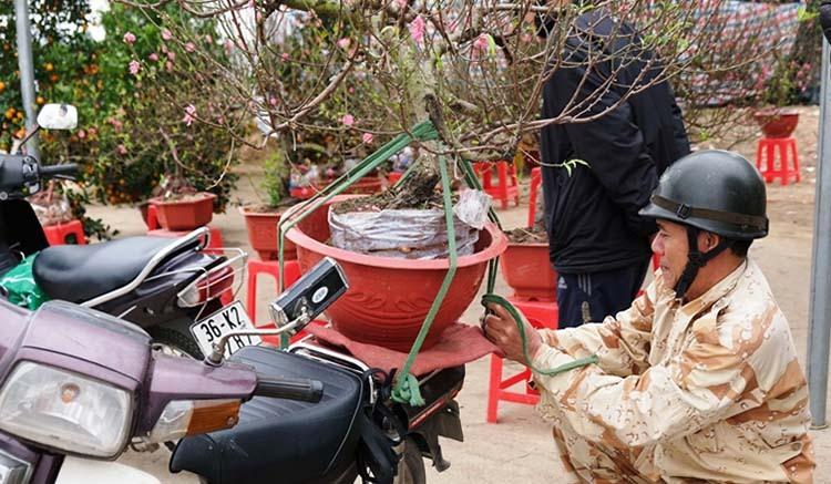 Những người chở cây thuê bằng xe máy phải buộc dây cẩn thận, nếu để hư hỏng phải bù tiền cho khách. Ảnh:Lê Hoàng.