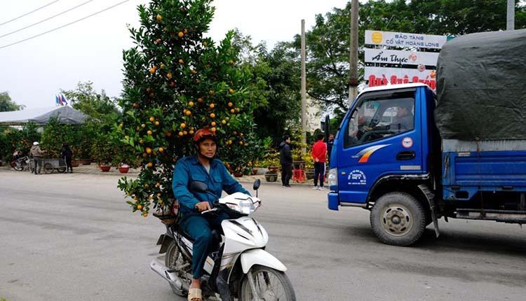 Nghề chở cây thuê dịp Tết ở TP Thanh Hoá có thể kiếm cả triệu mỗi ngày. Ảnh:Lê Hoàng.