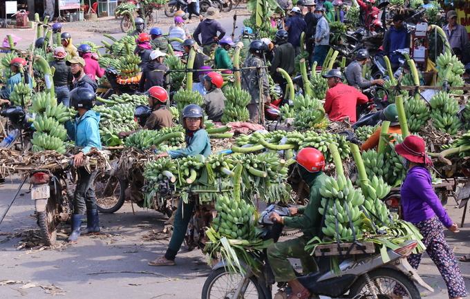 Chợ chuối nhộn nhịp ngày cận Tết