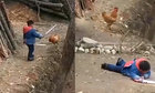 Bé trai ngã chổng vó khi bị gà phản công