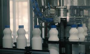 Quy trình sản xuất sữa tươi