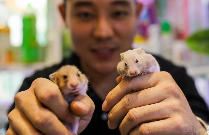 Nuôi chuột hamster