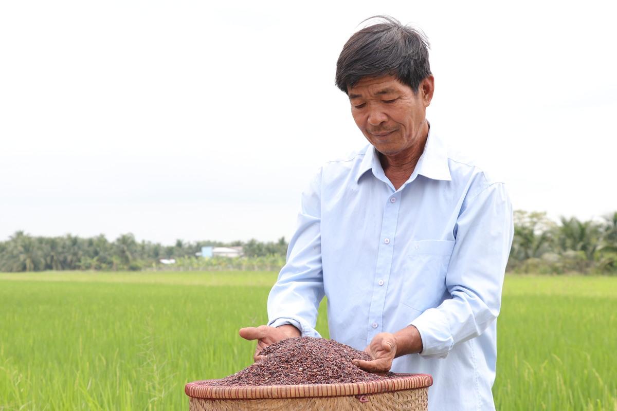Ông nông dân miền Tây mê trồng lúa tím