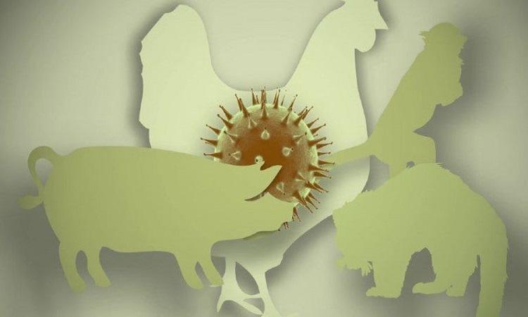 Con đường lây nhiễm của virus viêm phổi Vũ Hán