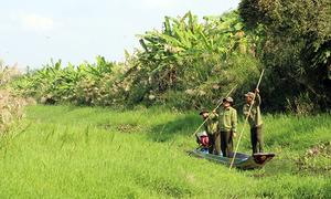 Tết của những người giữ rừng U Minh