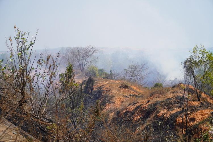 Khu rừng cháy tỏa khói bao phủ mù mịt ở Mũi Né. Ảnh: Việt Quốc