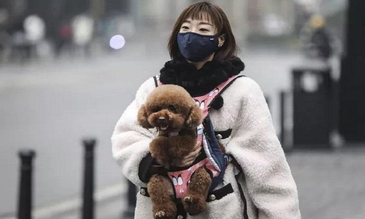 Người phụ nữ đeo khẩu trang trong khi mang chó ra đường ở Vũ Hán hôm 22/1. Ảnh: Newsweek.