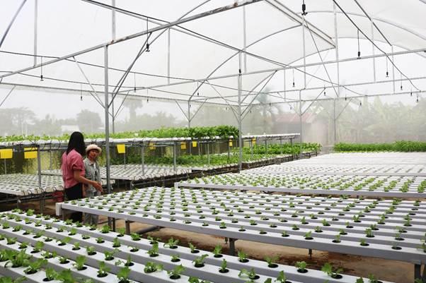 Vườn rau thủy canh của Minh Hiếu rộng 200m2 với chi phí đầu tư 200 triệu.