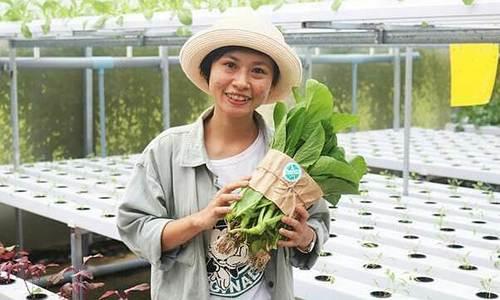 Nhân viên văn phòng nghỉ việc để trồng rau công nghệ cao