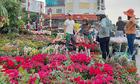 Cuộc đấu trí nơi chợ hoa Tết