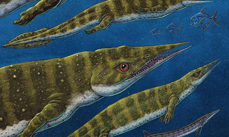 Hình ảnh phục dựng loài G. joseeae. Đồ họa: Ray Trool.