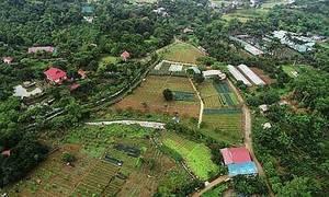 Trang trại rau hữu cơ rộng 60ha