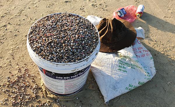 Một thùng ốc ruốc nặng 25kg được thương lái thu mua loại nhỏ 180.000 đồng; loại lớn hơn 220.000 đồng. Ảnh: Đắc Thành.