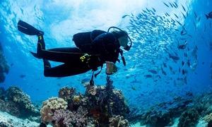 Nha Trang lọt top 10 điểm lặn tốt nhất thế giới