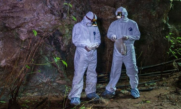 Các nhà nghiên cứu lấy mẫu phân dơi trong hang động. Ảnh:EcoHealth Alliance.