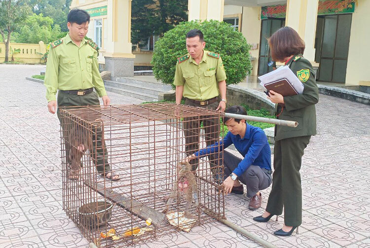 Nhà chức trách làm thủ tục thả khỉ về tự nhiên vào sáng 13/2. Ảnh: Gia Hân
