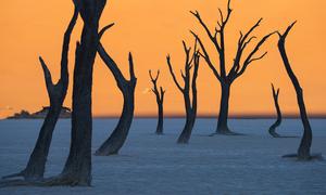 Rừng cây khô hàng trăm năm tuổi không phân hủy