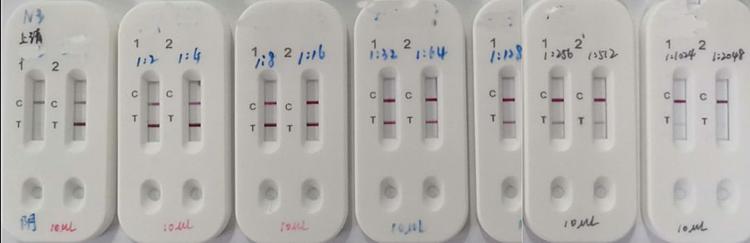 Mẫu huyết tương của người nhiễm nCoV được phát hiện bằng bộ thử nghiệm mới sau khi pha loãng đến 1: 512 lần (từ trái sang phải). Ảnh : CCTV.