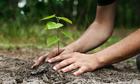 Hungary trồng 10 cây xanh mỗi khi có em bé chào đời