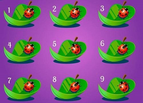 Năm câu đố thử tài tinh mắt - 2