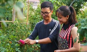 Vườn hồng của vợ chồng kỹ sư