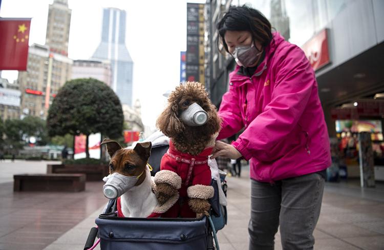 Một phụ nữ đẩy chó đi dạo ở Thượng Hải hôm qua. Ảnh: AFP