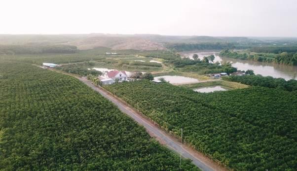 Vườn cam sành của ông Nguyễn Hữu Hạng đạt 255 chỉ tiêu hữu cơ USDA Organic của Mỹ và EU Organic của châu Âu năm 2018. Cây phát triển nhờ nguồn phù sa từ sông Đồng Nai và sông Bé đổ về.
