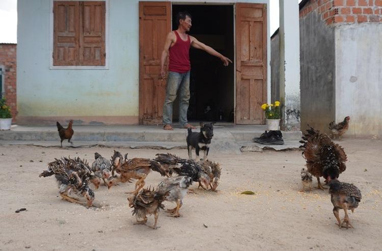 Đàn gà lông ngược của gia đình ông Hùng. Ảnh: Trần Hóa.