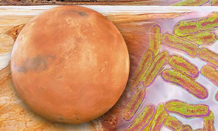 Con người cần chuẩn bị cho tình huống mẫu vật lấy từ sao Hỏa mang mầm bệnh mới. Ảnh: Daily Express.