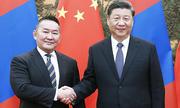 Mông Cổ tặng Trung Quốc cừu để chống nCoV
